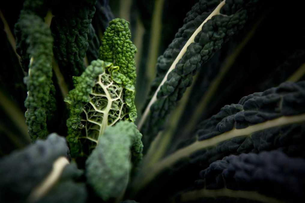 kale grönkål palmkål svartkål