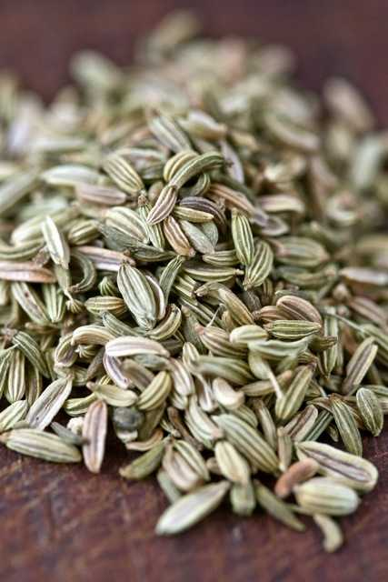 fänkålsfrö fennel spice seed krydda